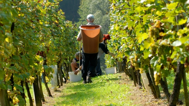 Wine regions and coastal regions are a hot focus in SA.