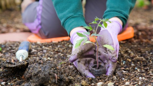 Could your small farm be the key to hunger issues?