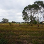 Sold Austral Elders Real Estate Liverpool for sale agent land