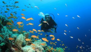 Bali ranks among the best areas in the world for diving.
