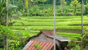 the Jatiluwih Rice terraces are one of Tabanan's most beautiful sights.