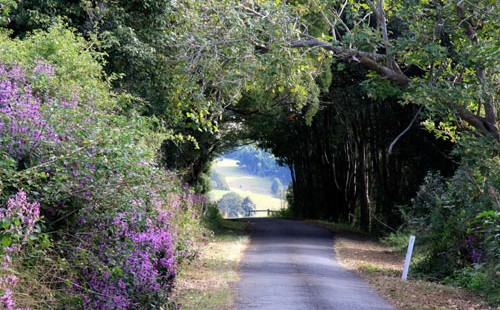 Tree change to Bangalow and surrounds